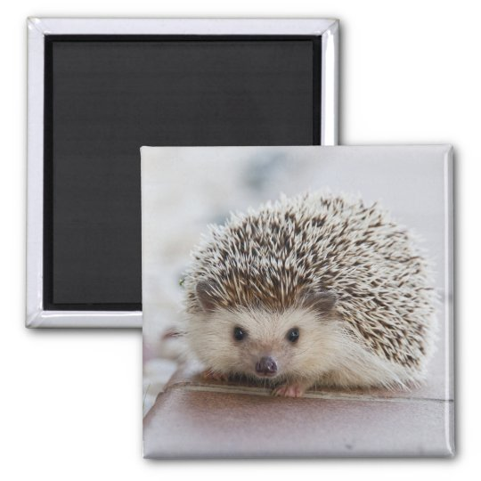 Adorable hedgehog square magnet