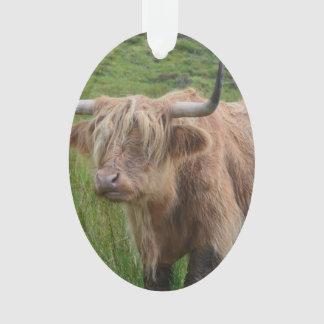 Adorable Highland Cow
