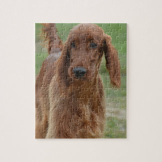 Adorable Irish Setter Jigsaw Puzzle