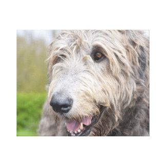 Adorable Irish Wolfhound Canvas Print