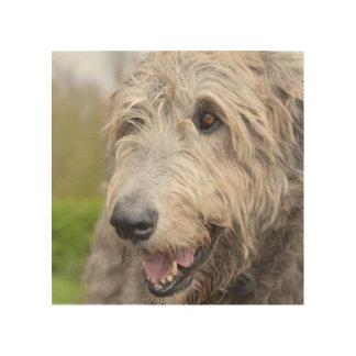 Adorable Irish Wolfhound Wood Canvas