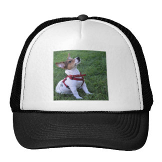 adorable jack russell terrier  puppy obedient dog trucker hat