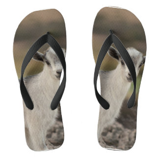 Adorable Kid Goat Flip Flops