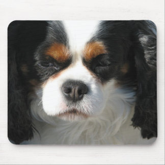 Adorable King Charles Spaniel Mouse Pad