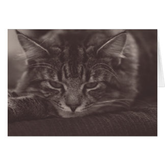 Adorable Kitten Greeting Card