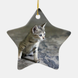 Adorable Kitten on a marble floor. Ceramic Star Decoration