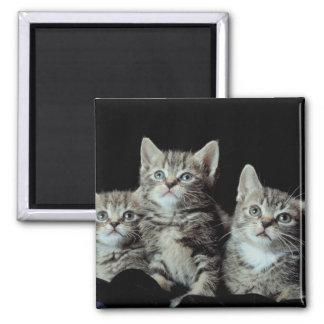 Adorable Kitten Trio Square Magnet