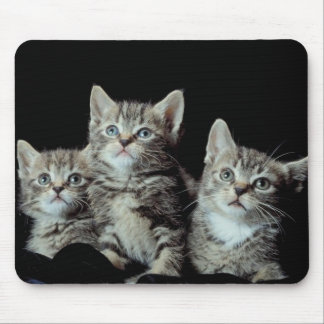 Adorable Kittens Mouse Mat