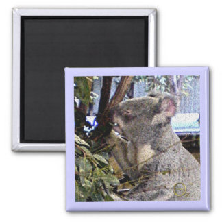 Adorable Koala Square Magnet