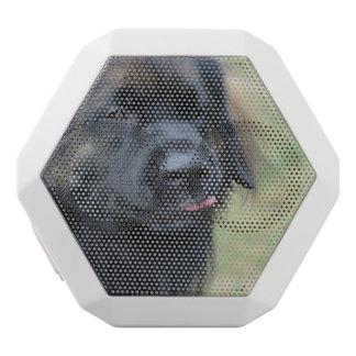 Adorable Leonberger