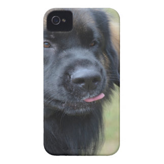 Adorable Leonberger Case-Mate iPhone 4 Cases