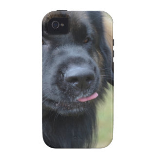 Adorable Leonberger iPhone 4 Cases