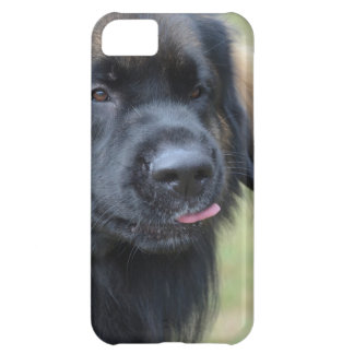 Adorable Leonberger iPhone 5C Cover