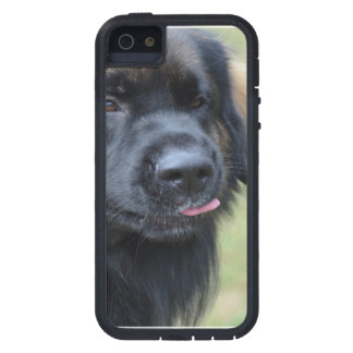 Adorable Leonberger Case For iPhone 5