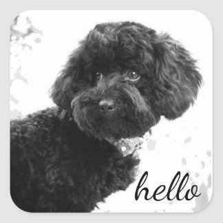 Adorable Loving Friend/Black Poodle Puppy Hello Square Sticker