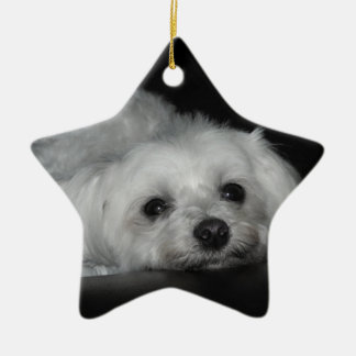 Adorable Loving Maltese Christmas Puppy Ornament