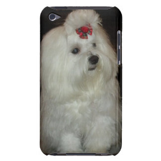 Adorable Maltese Dog Case-Mate iPod Touch Case