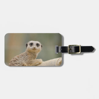Adorable Meerkat Looking At You Luggage Tag