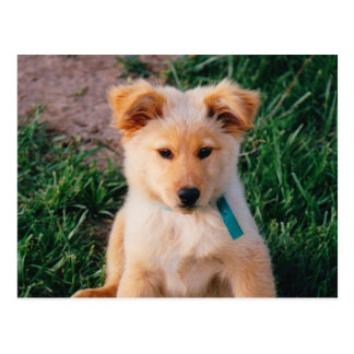 Adorable Mixed Breed Puppy Postcard