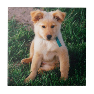 Adorable Mixed Breed Puppy Small Square Tile
