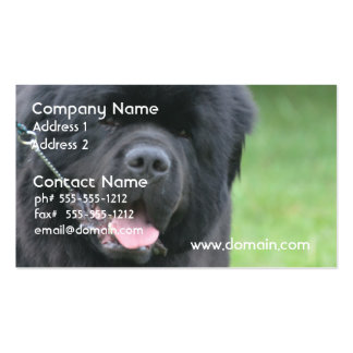 Adorable Newfoundland Pack Of Standard Business Cards