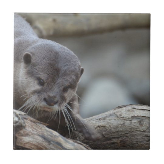 Adorable Otter Small Square Tile