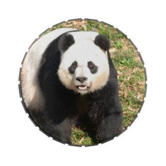 Adorable Panda Bear Candy Tins
