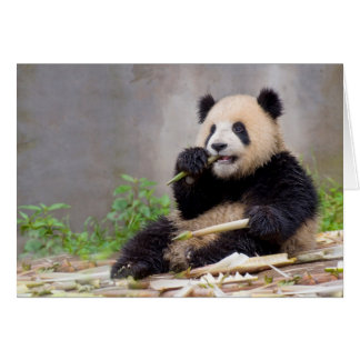 Adorable Panda Nibbling Bamboo greeting card