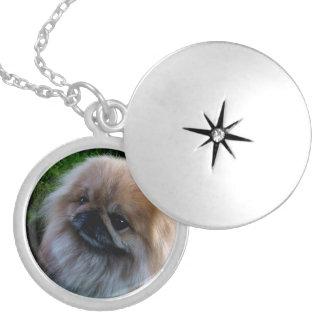 Adorable Pekingese Puppy Round Locket Necklace