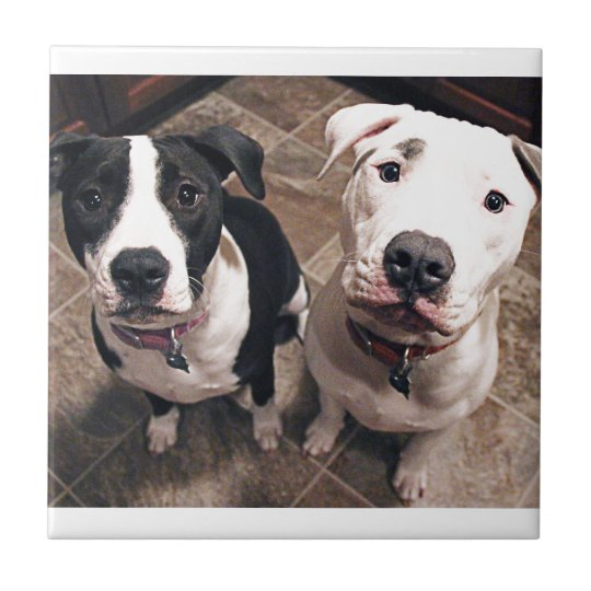 adorable pitbull puppies dogs small square tile