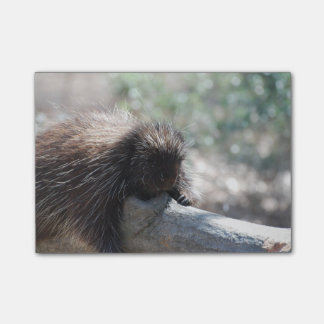 Adorable Porcupine Post-It Note