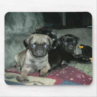 Adorable Pug Puppies Mouse Pad