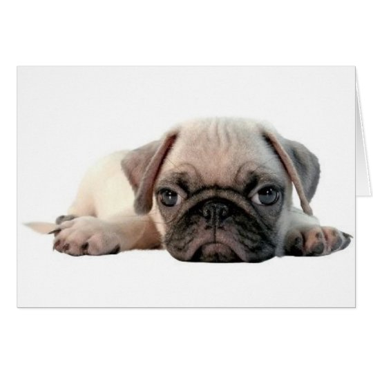 adorable pug puppy greeting card