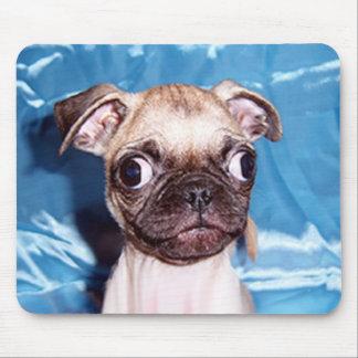 Adorable Pug Puppy Mousepad
