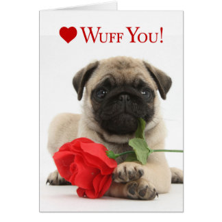 Adorable Pug Puppy Valentine with a Red Rose Greeting Card