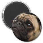Adorable Pug Refrigerator Magnet