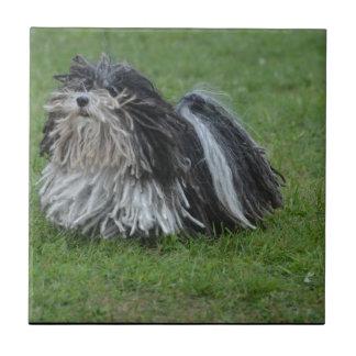 Adorable Puli Dog Small Square Tile