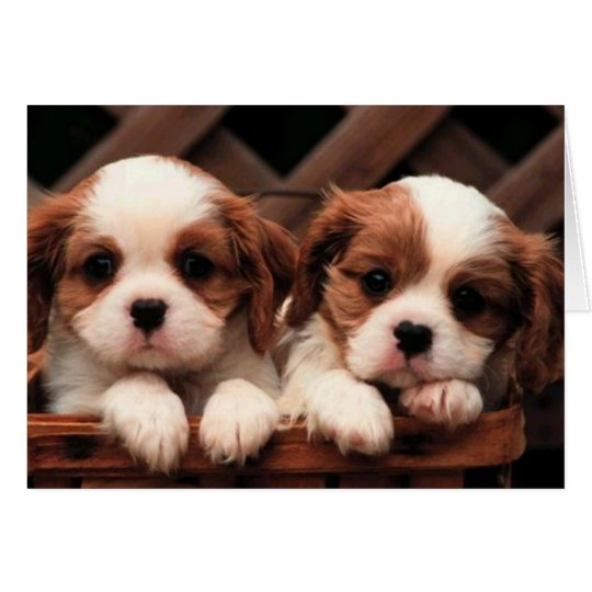Adorable Puppy Twins Card