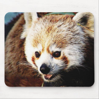 adorable red panda mouse pad