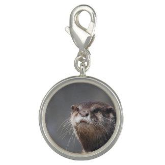 Adorable River Otter