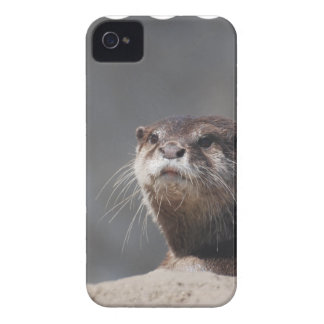 Adorable River Otter iPhone 4 Cases