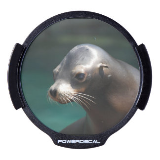 Adorable Sea Lion LED Window Decal
