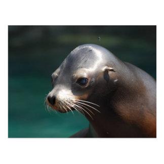 Adorable Sea Lion Postcard