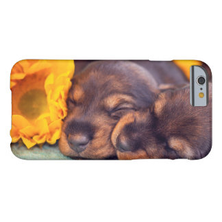 Adorable sleeping Doxen puppies Barely There iPhone 6 Case