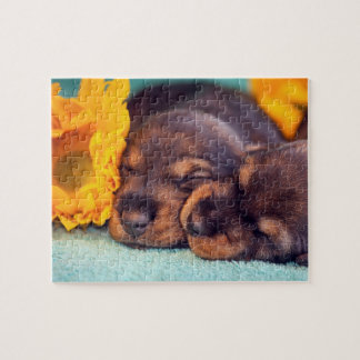 Adorable sleeping Doxen puppies Jigsaw Puzzle