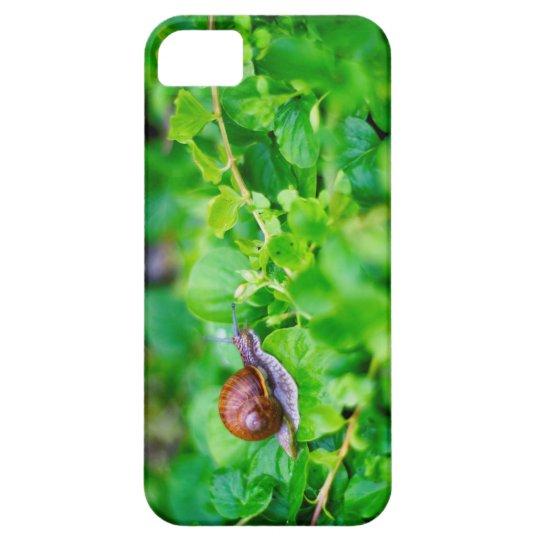 Adorable snail in a green garden case for
