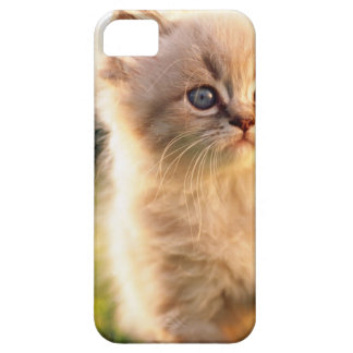 Adorable Stop Motion Kitten Barely There iPhone 5 Case