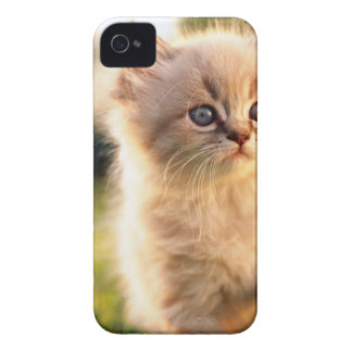 Adorable Stop Motion Kitten Case-Mate iPhone 4 Cases
