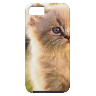Adorable Stop Motion Kitten iPhone 5 Cover