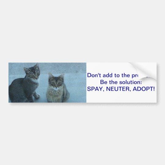 Adorable Stray kitten's send a message Bumper Sticker
